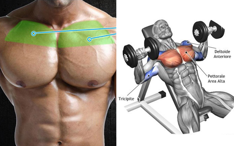 6 Tips And Guide For Building A Big Upper Chest