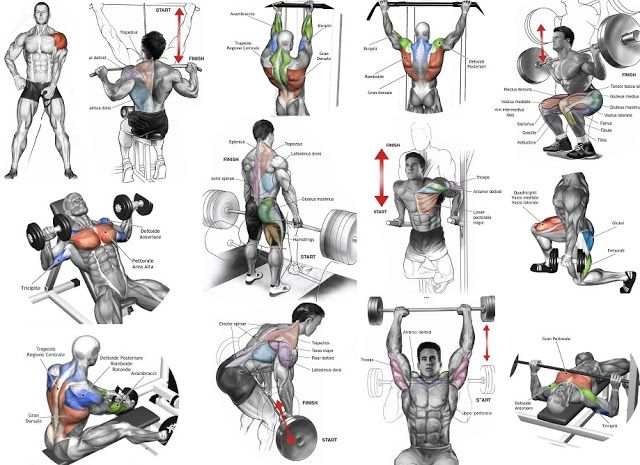 Workouts in one day to add size your physique