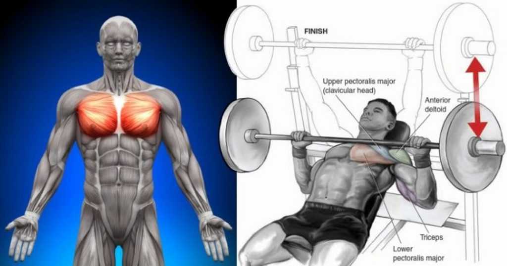Chest Workout 40 Minutes Complete With 6 Exercises | Fitness ...