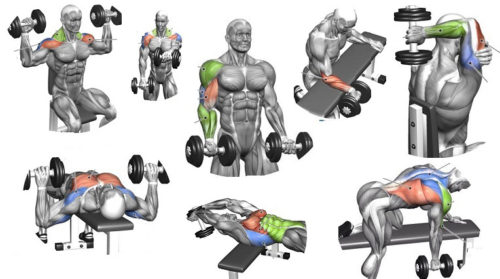Weight Lifting at Home: Dumbell Routines