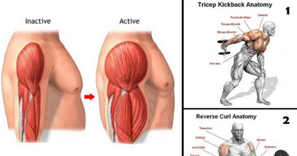 Gain Biceps And Triceps Mass With These 12 Exercises And Workout ...