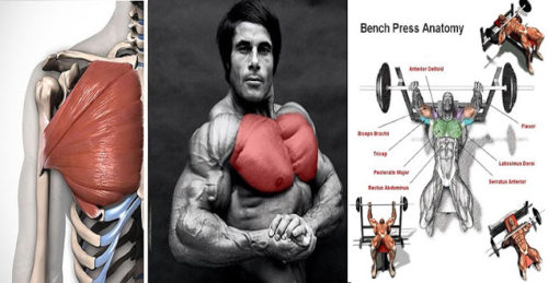 Program For Strength and Size Chest