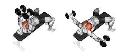 Lie On Your Back An Exercise Bench With Arms Extended And The Elbows Slightly Bent