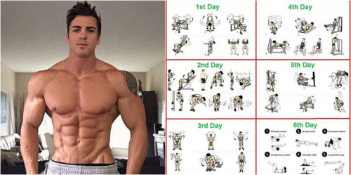 Total Body Workout Routine And How To Set Up Workouts