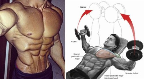 Chest Exercises to Pump up your Pecs