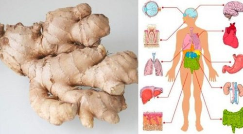 If You Eat Ginger Every Day for a Month This is What Happens to Your Body