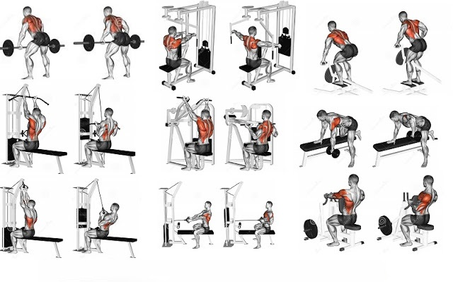 The Best Upper Body Muscle Building Exercises Fitness Workouts Exercises
