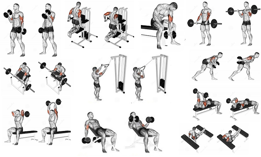 Build Arm Muscle Fast Without Weights