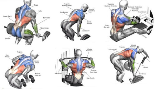 Building Back Muscles – 3 Mass Building Back Exercises