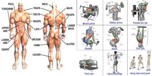 Best Bodybuilding workout For Serious Muscle Gain!