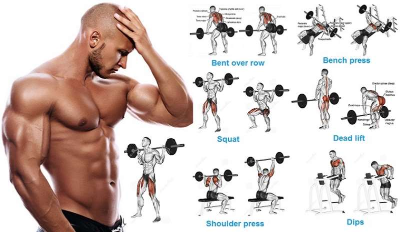 MUSCLE AND FITNESS WORKOUTS DOWNLOAD