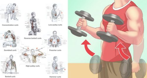 How to Build Bigger Biceps – 4 Easy Exercises to Bulk up Your Biceps