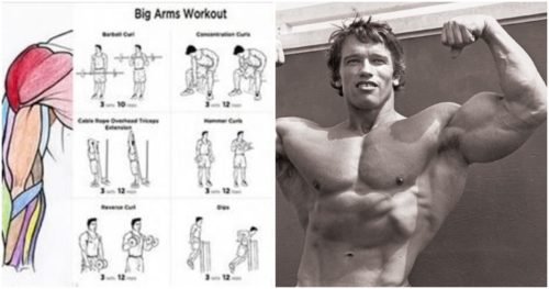 The 18 Best Dumbbell Exercises For Biceps