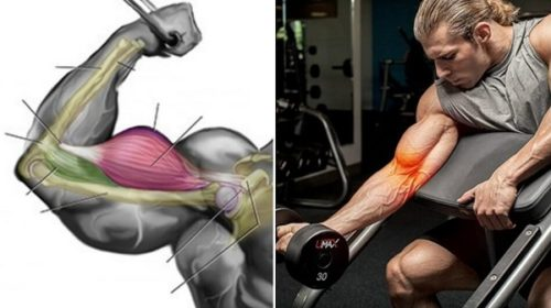 Why You Aren't Gaining Biceps Fast-These are 3 Essential Reasons