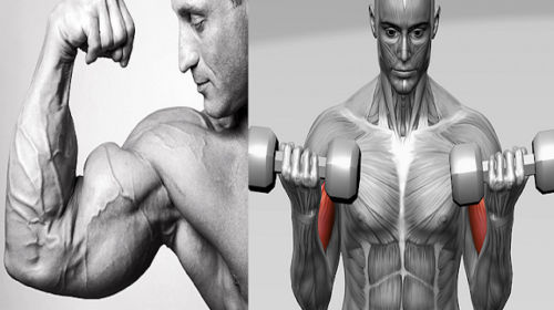 Tips For Skin Tight & Sleeve Busting Bicep Pumps