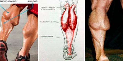 4 Reasons Why My Calves Are Growing & Yours Are Not