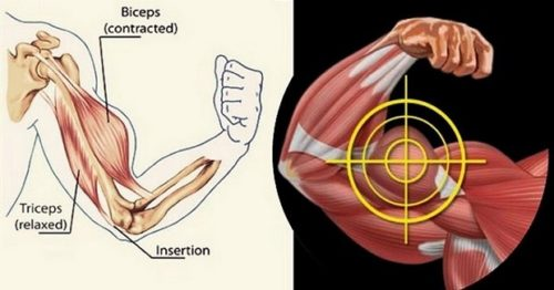The Most Powerful Biceps Workout Plan