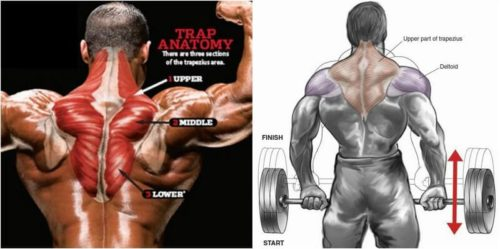 Traps Workout & Training Plan To Build Towering Traps