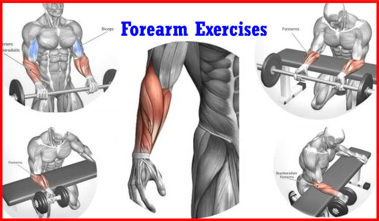 4 Top Forearm Exercise Workout At Gym