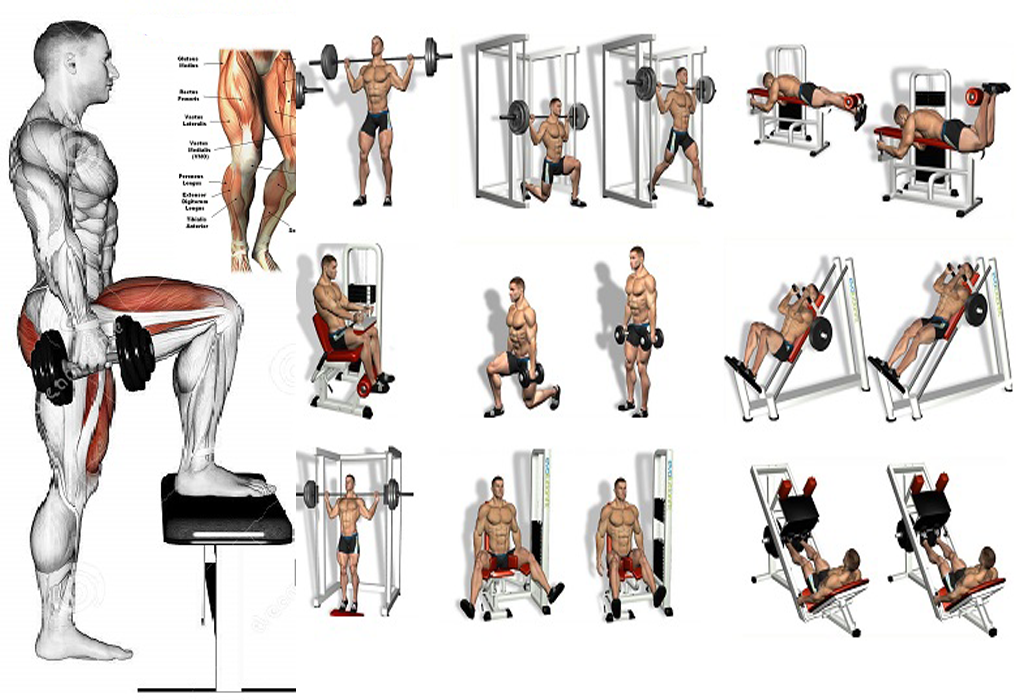Best Mass Building Leg Exercises