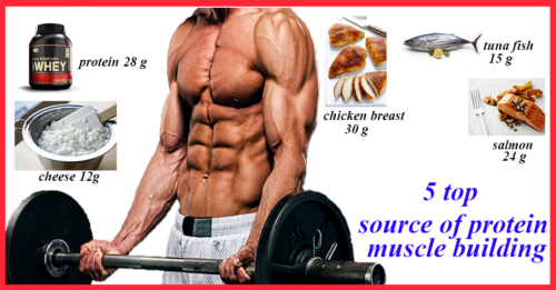 The Top 5 Source of protein muscle building