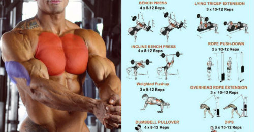 Chest And Triceps Superset Workout – Muscles to Grow Bigger