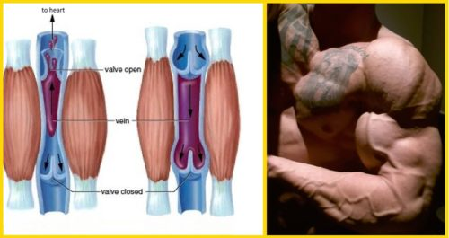 6 Ways to Increase Muscle Pump and Vascularity