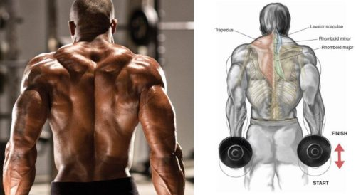 Do Paused Shrugs for Bigger Traps
