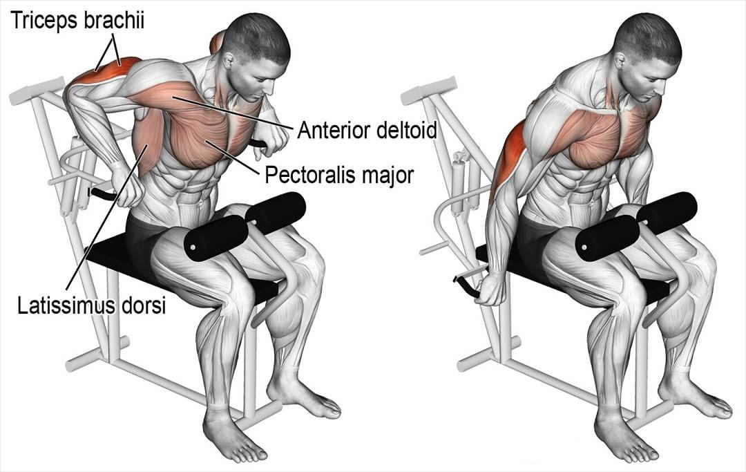 6 Best Triceps Workouts - Unleash New Arms Growth ...
