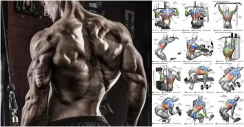 Top 10 The Best Muscle-Building Back Exercises!