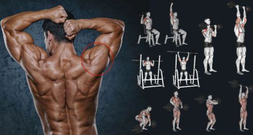 10 Best Muscle-Building Shoulder Exercises To Build 3D Shoulders