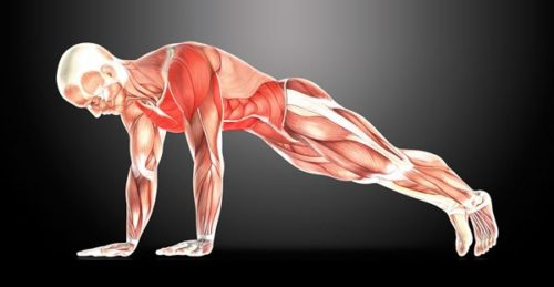 Best Bodyweight Exercises for a Shredded Physique